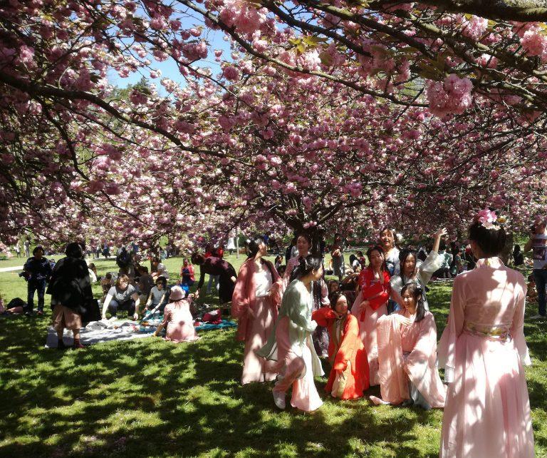 Γιορτάζοντας το πνεύμα της κερασιάς στο Παρίσι
